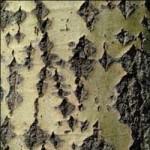свойства коры осины