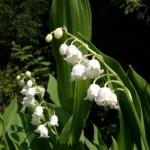 лечебные травы, здоровье