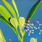 растения, энергия,