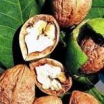 грецкий орех,полезные свойства