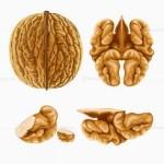 грецкий орех, полезные свойства, сосуды