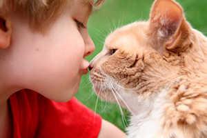 глисты, кошка, домашние животные