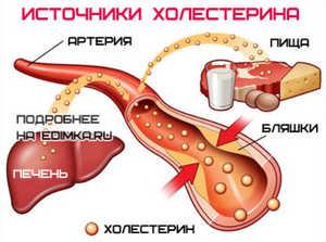 холестерин в организме человека образуется