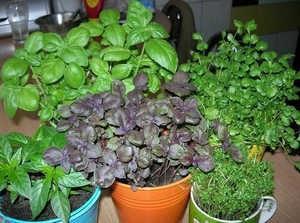 выщивание трав, лекарственные растения